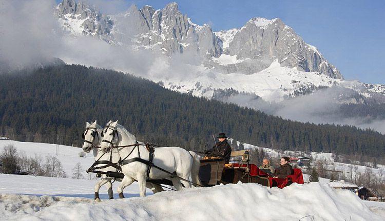Липицианские кони в упряжках покоряют Альпы
