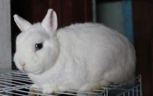 Для кроликов — универсальный корм для всех возрастов