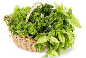 Летом увеличивают количество свежей зелени