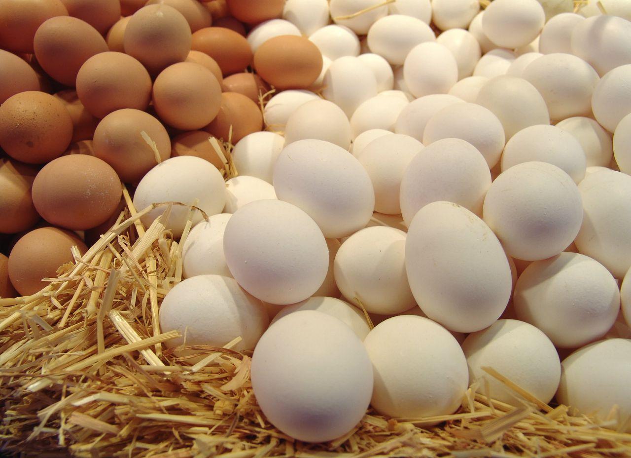От чего зависит цвет скорлупы куриного яйца?