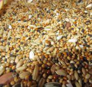 Зерновые – основа концентратов