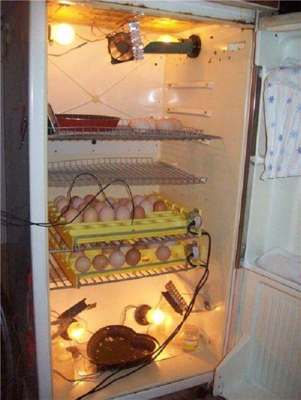 Как сделать инкубатор из холодильника своими руками