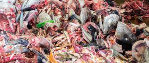 Рыбные отходы поставляют в организм протеины