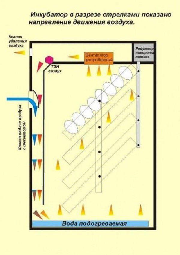 Чертеж вертикального инкубатора из холодильника, направление циркуляции воздушных потоков