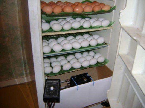 Вариант вертикального инкубатора из холодильника