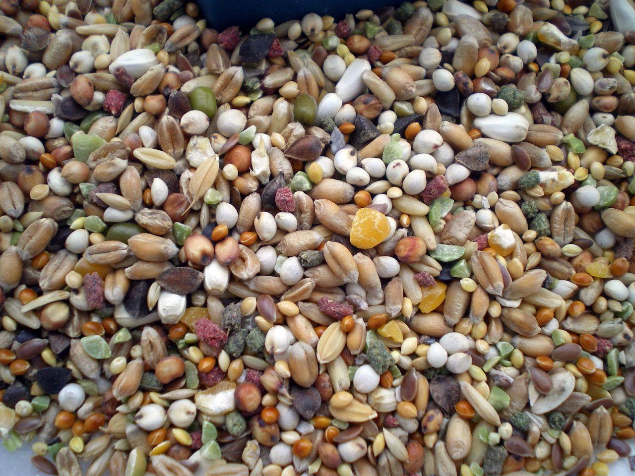 Основа рациона - зерно и семена растений