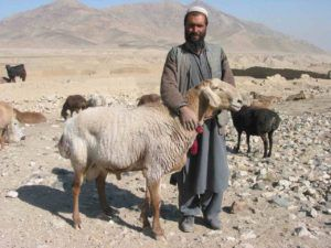 Афганский фермер