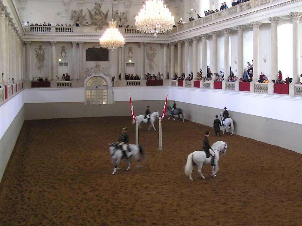 Тренировка в школе верховой езды в Вене