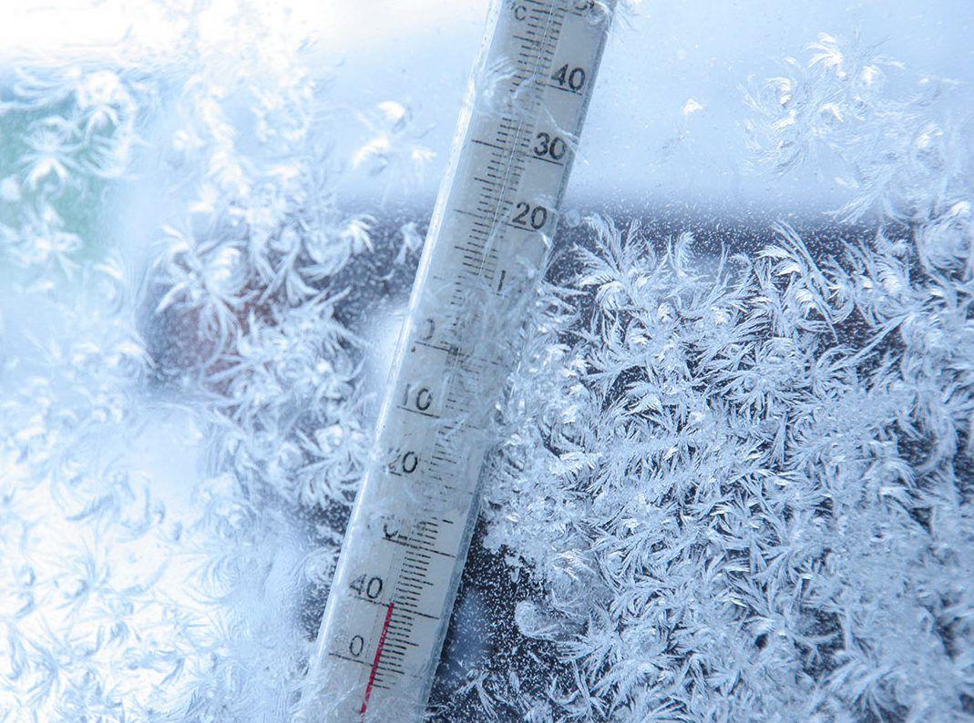 Страусы могут выжить даже при -38°С, поэтому они обратили на себя внимание сибирских птицеводов
