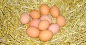 Отбор яиц для закладки