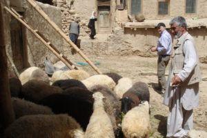 Мелкое фермерское хозяйство в Афганистане