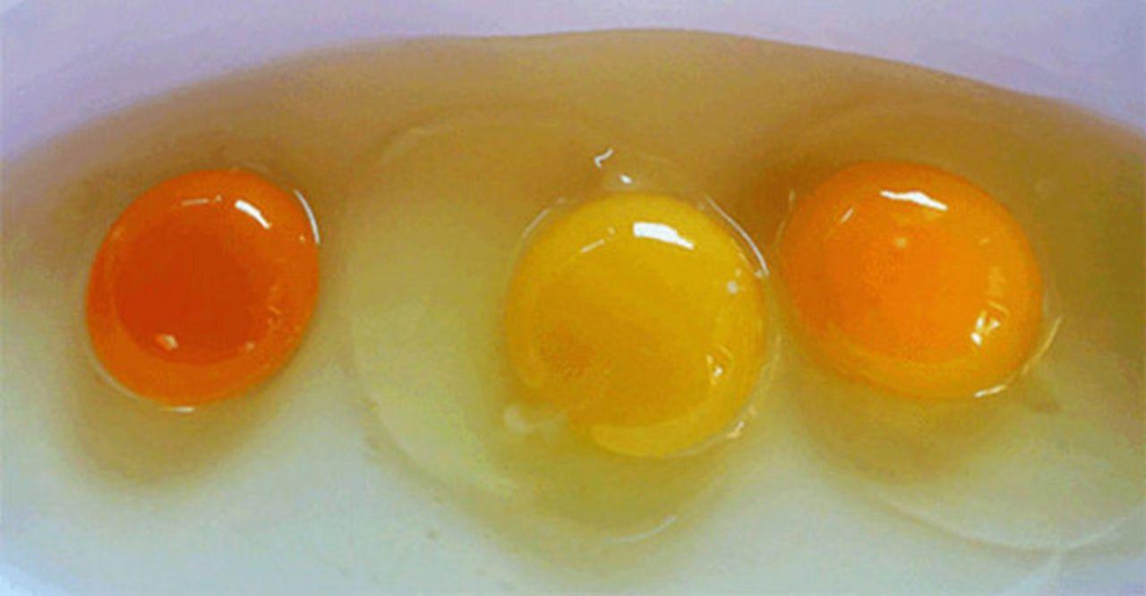 Как оттенок желтков не связан с качеством яиц, так и окрас яичной оболочки не связан со вкусовыми или питательными характеристиками