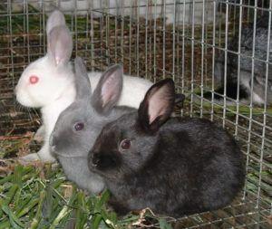 Двухмесячные крольчата полностью самостоятельны