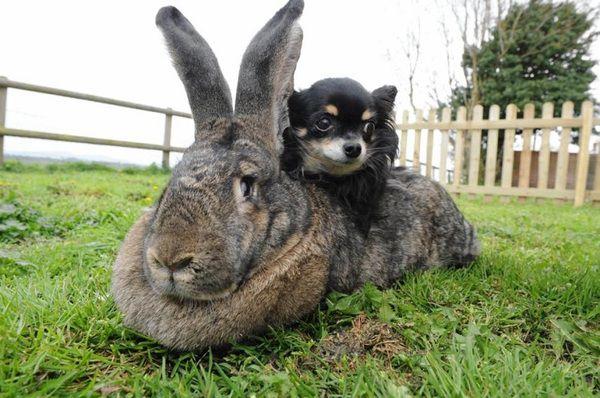 Каталог кроликов самые распространенные породы кроликов