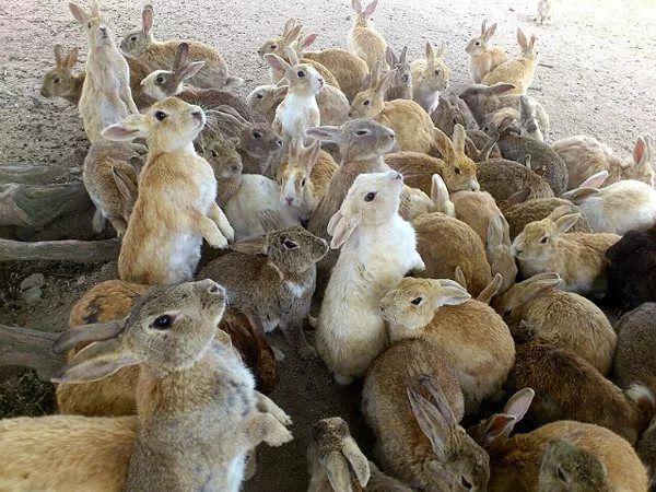 При рассадке нужно следить за размерами кроликов в одной клетке