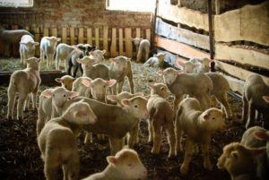 Анализ рынка сельскохозяйственной отрасли