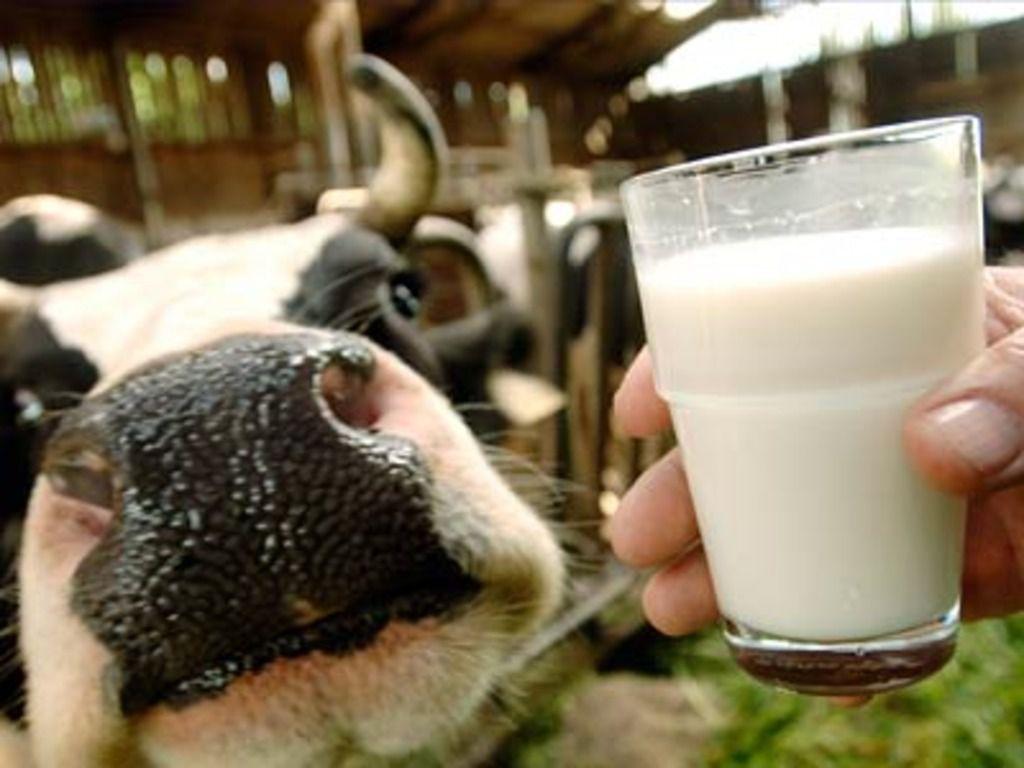 Порода коровы и состояние ее здоровья существенно влияют на удой