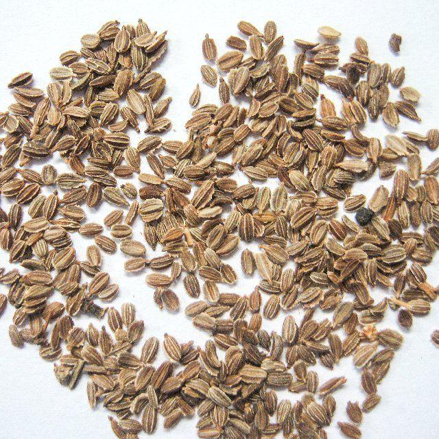 Перепела обожают конопляные и льняные семена