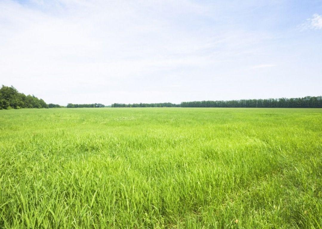 Рекомендуют использовать участок земли, расположенный с южной стороны: страусы любят понежиться на солнышке