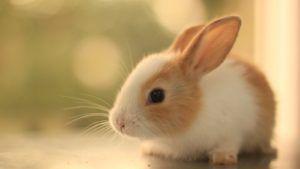 Опытные кролиководы производят отсадку с учётом общего состояния помета