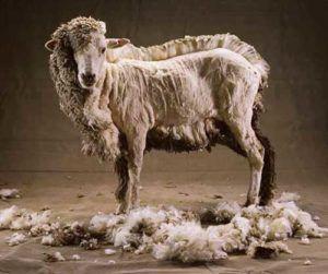 Переработка шерсти