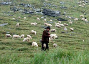 Пастух пасет поголовье овец