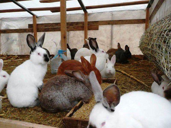 Разведение кроликов затратно