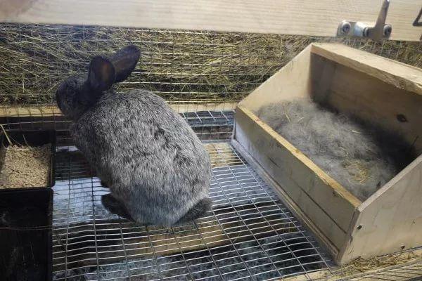 Гнездо (или маточник) для кроликов