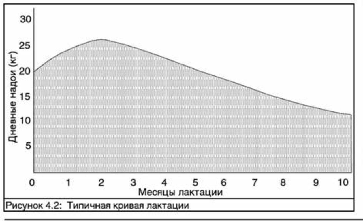 Типичная кривая выработки молока
