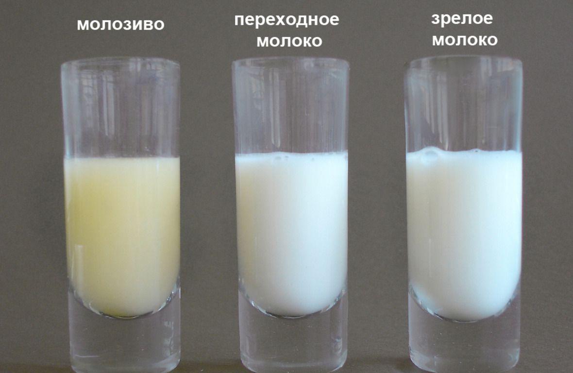 Молозиво, переходное и зрелое молоко
