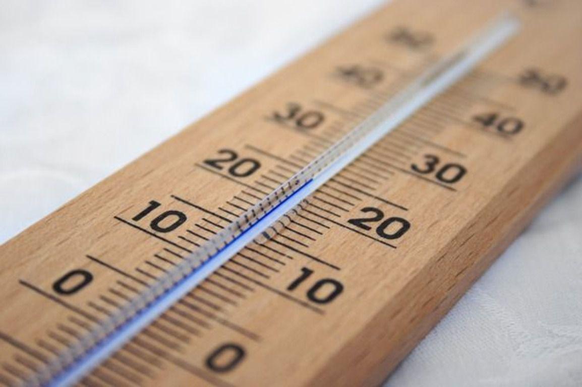Оптимальная температура для содержания перепела: 20 — 22°С