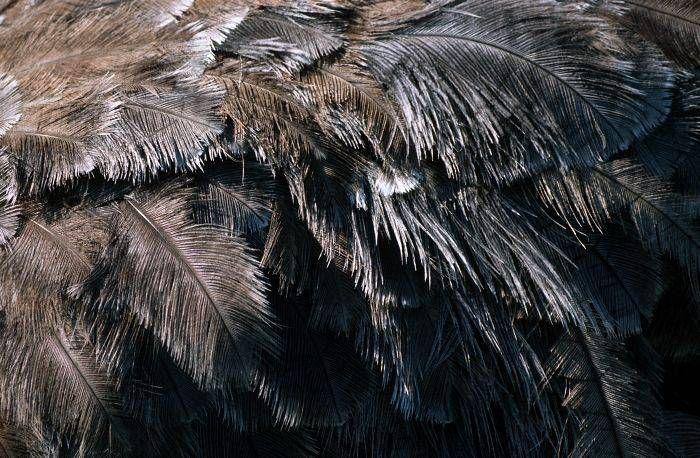 Страусиные перья приглянулись художникам и любителям домашнего творчества