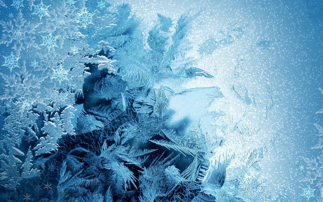 Леггорн-33 является достаточно морозоустойчивой породой