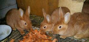 Следите за свежестью продуктов, которыми вы кормите кролей