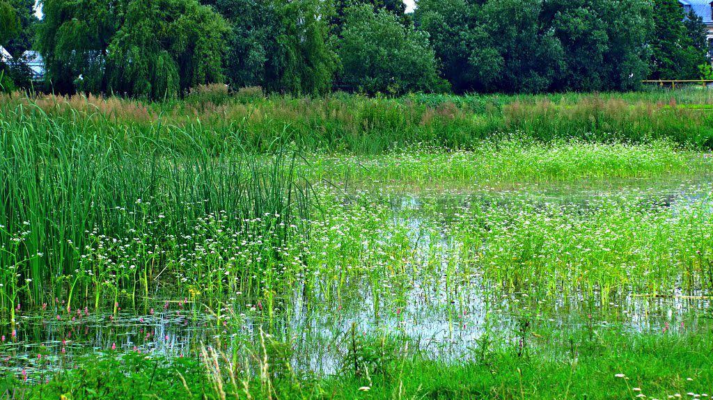 Не рекомендуется строить ферму на заболоченной или сырой земле