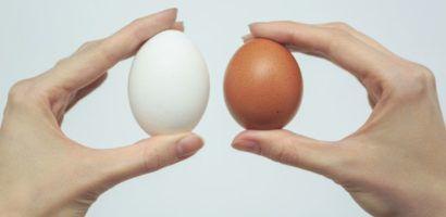 Прочность яичной оболочки не зависит от окраса