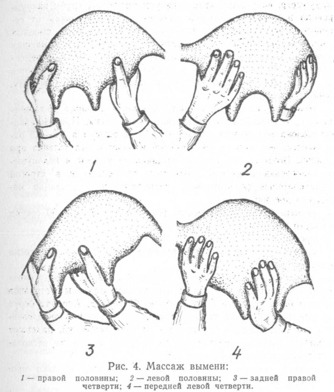 Схема массажа вымени