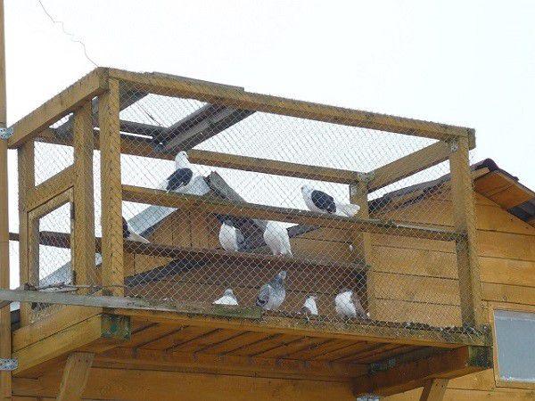 Навесная голубятня не подходит для качественного разведения голубей