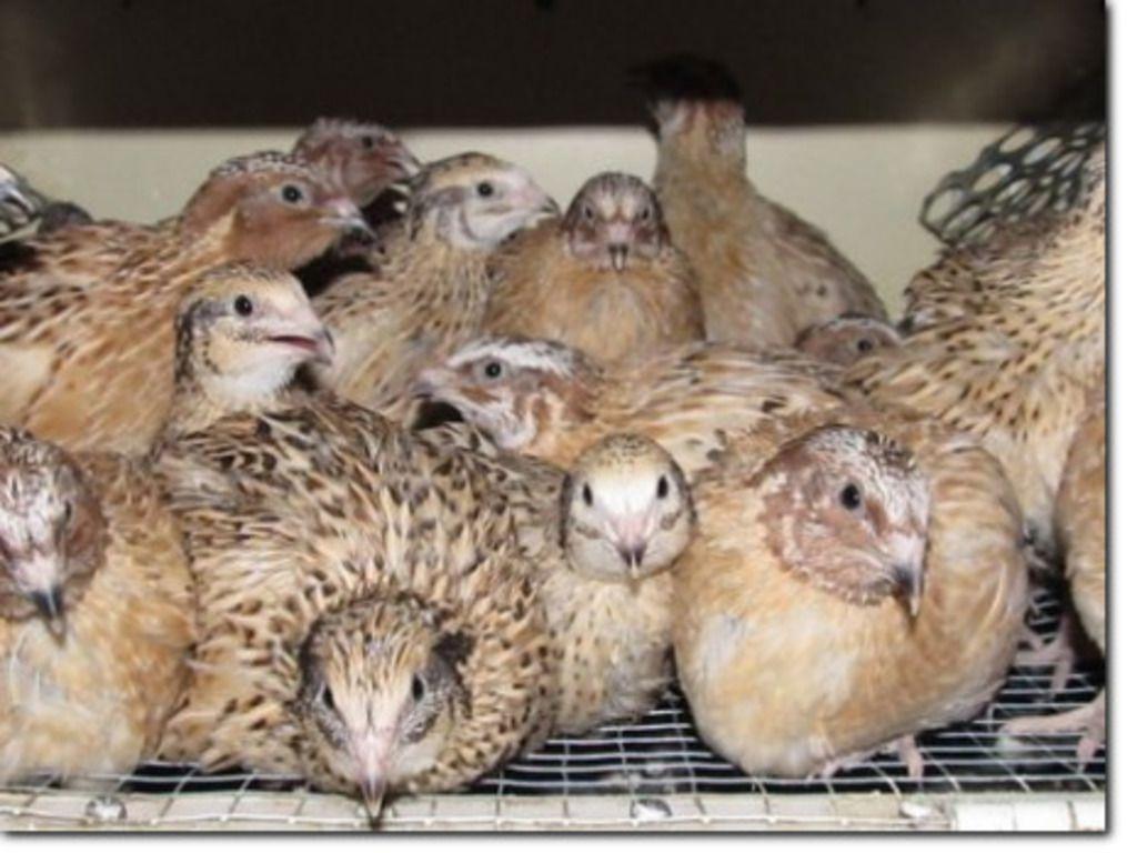 Умиротворенные птицы не торопятся покинуть открытую клетку