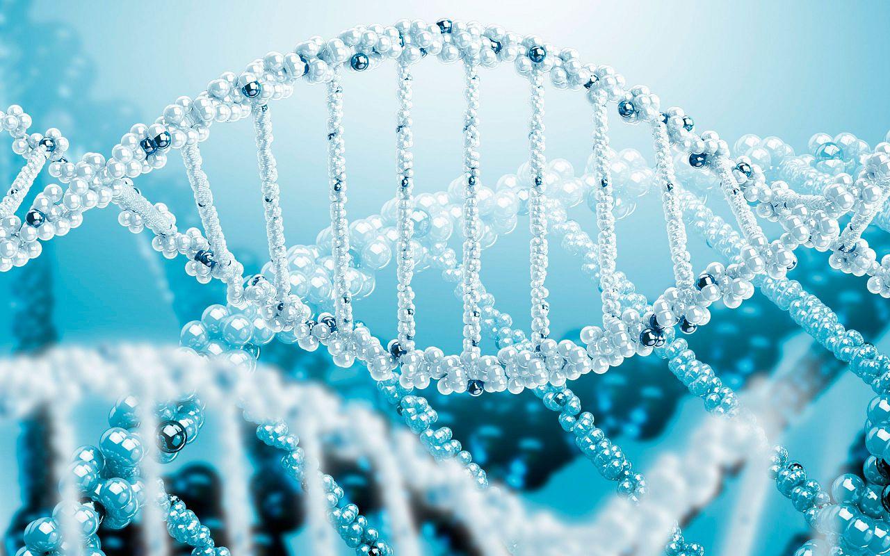 DW — ген карликовости - стал главным участником процесса создания миниатюрных кур