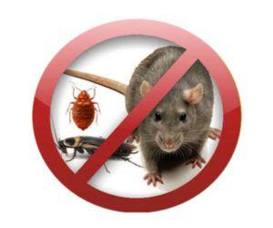 Регулярно проводить профилактические меры по уничтожению грызунов.