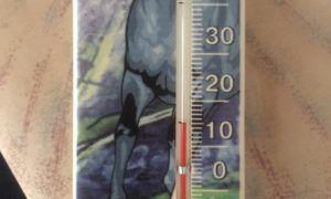 15°С является оптимальной температурой для содержания пернатых.