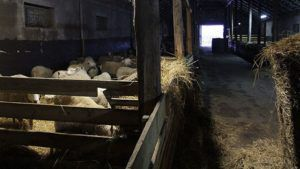Для начинающих бизнесменов подойдет заброшенная ферма