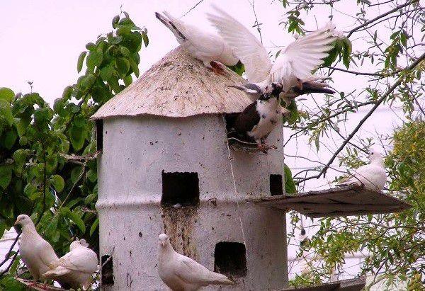 Оригинальная башенная голубятня из бочки