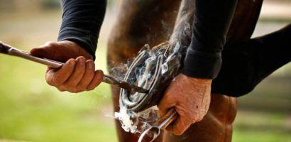 Копыто лошади