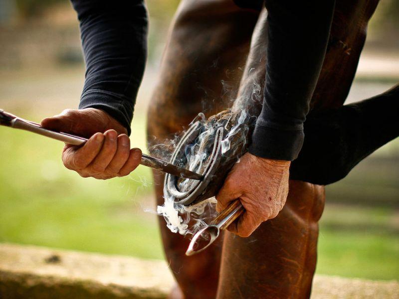 Для чего у лошади на ногах копыта