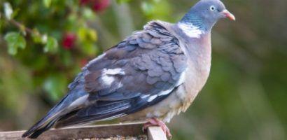 Кормушки для голубей