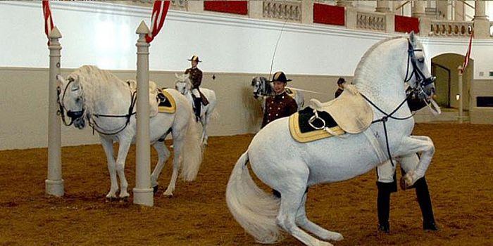 Процесс тренировки лошадей
