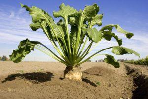 Процесс выращивания