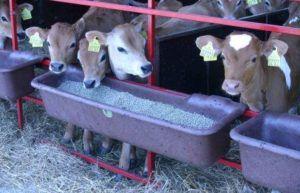 Удобное кормление коров